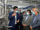 رفع چالشهای صنعت مرغ با تکمیل زنجیره تولید امکان پذیر است