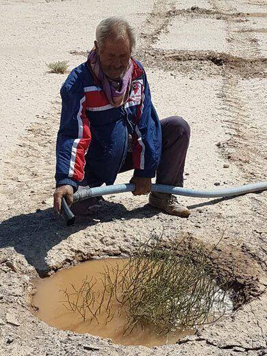 تاغ در 125 هکتار از روستای کلاته فرهنگ میامی کشت شد