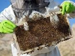 ایجاد اشتغال پایدار با صنعت زنبورداری