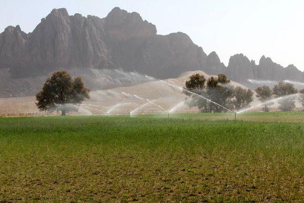 امسال حدود 9 هزار هکتار آبیاری نوین درسیستان وبلوچستان اجرا می شود