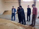 ۲۶ مرکزخرید محصول کشاورزان استان را تحویل می گیرند