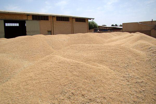خرید گندم مازاد بر نیاز کشاورزان از ۲۱۰ هزار تن فراتر رفت