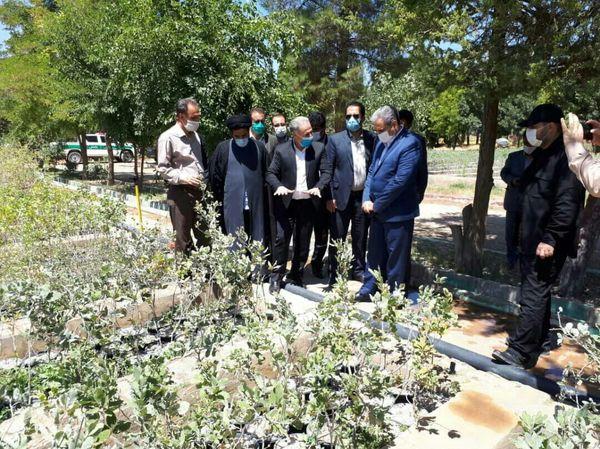 توسعه نهالکاری موجب غنای جنگلهای ایلام میشود