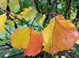 خشکسالی چهره  باغ های خراسان شمالی را به زردی کشاند