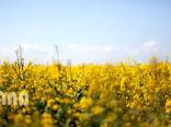 زمان بازپرداخت تسهیلات ماشین آلات کشاورزی به 10 سال افزایش یابد