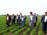 گلستان دومین تولید کننده چغندرقند پاییزه کشور