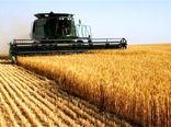 ۳ دلیل عدم تحویل گندم به دولت از سوی کشاورزان