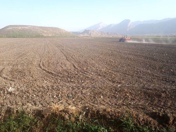 آغاز کشت دانه روغنی کلزا در  درهشھر