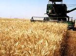 214 هزار تن گندم در کردستان خرید تضمینی شد