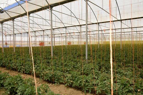 طرحهای بخش کشاورزی در قروه به بهرهبرداری رسید