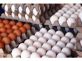 7000 تن تخم مرغ در بابل تولید شد/ تولید 860 میلیاردی