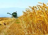خرید 1.5 میلیون تن گندم مازاد از کشاورزان