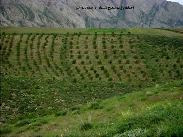توسعه باغات و گیاهان دارویی در اراضی شیبدار خراسان شمالی