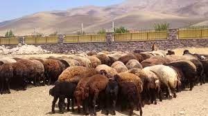 سه واحد دامداری در شهرستان بهارستان احیا شد