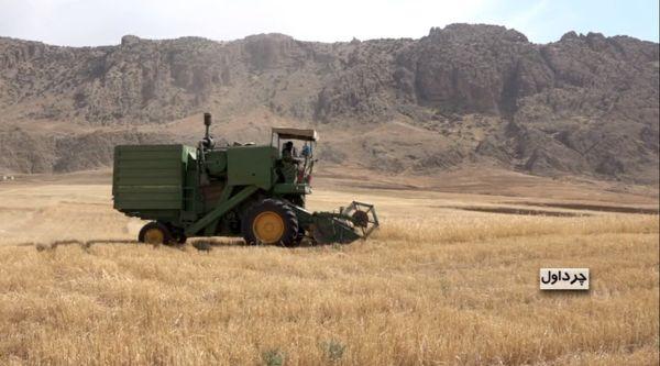برداشت گندم در مزارع شهرستان چرداول